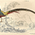 Golden Pheasant 1839 Victorian Sir William Jardine 'Naturalist Library' Antique