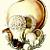 Puffball Mushrom and Cauliflower Mushroom 1943 Antique Rose Ellenby Botanical