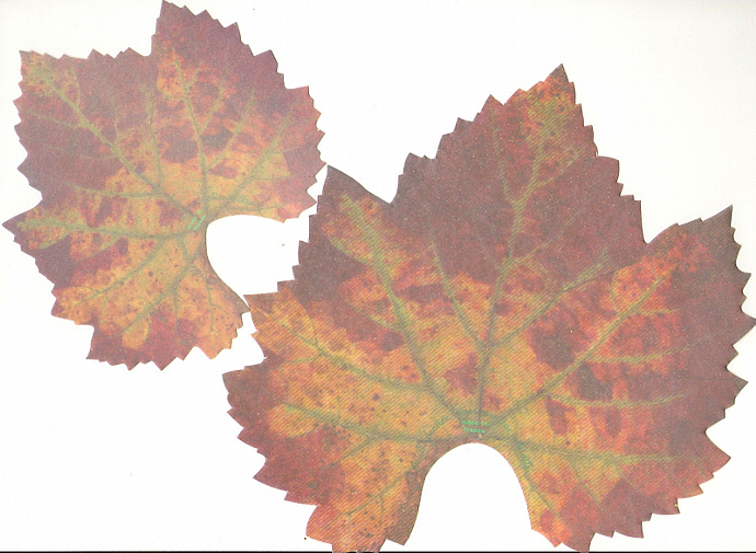 Autumn Leaves Cheese Papers, Packet of 7 Beautiful Realistic Leaf Papers