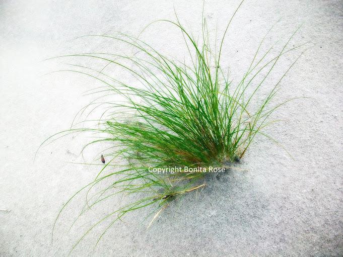 Ocean Photography - Sea Grass  8x10