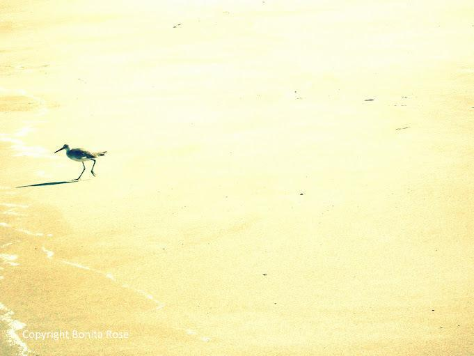 Ocean Photography - Lone Shorebird   8x10