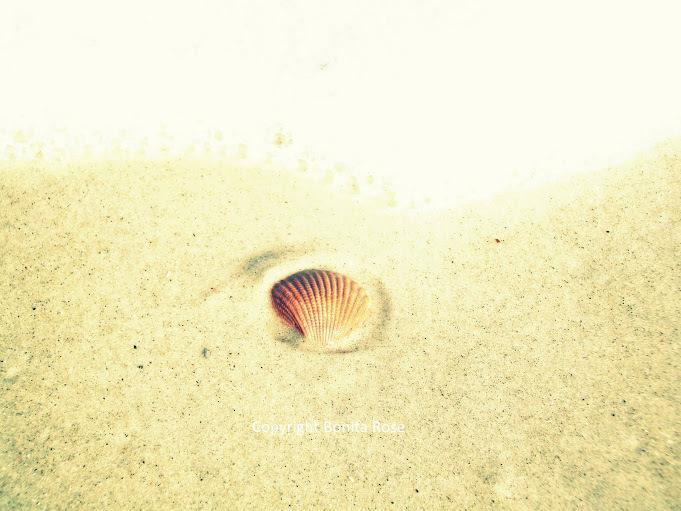 Ocean Photography - Seashell In The Sand  8x10