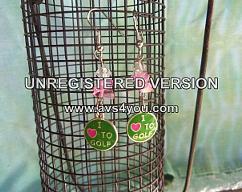 Item collection 2516623 original