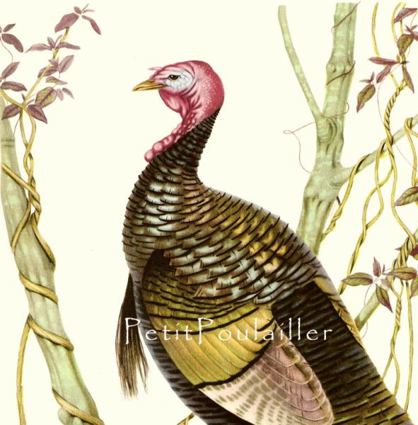 Eastern American Wild Turkey 1950 Mid-Century Athos Menaboni Antique Bird