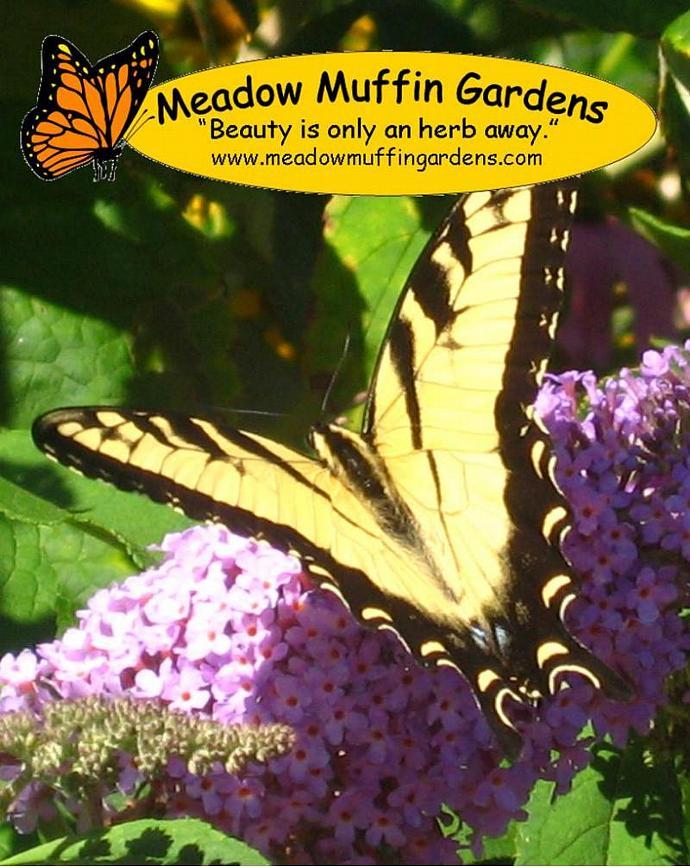 Dandelion Flower Balm, Salve, PMS relief, Breast Health