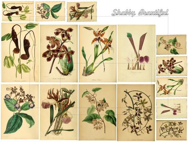 Shabby chic flowers Vintage Botanicals in Brown collage sheet DC5