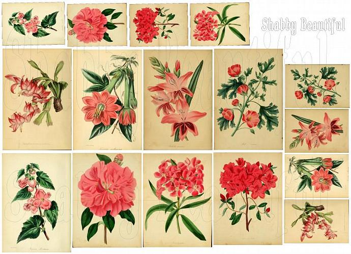 Shabby chic Pink Botanical digital collage sheets for scrapbook and cards DC10