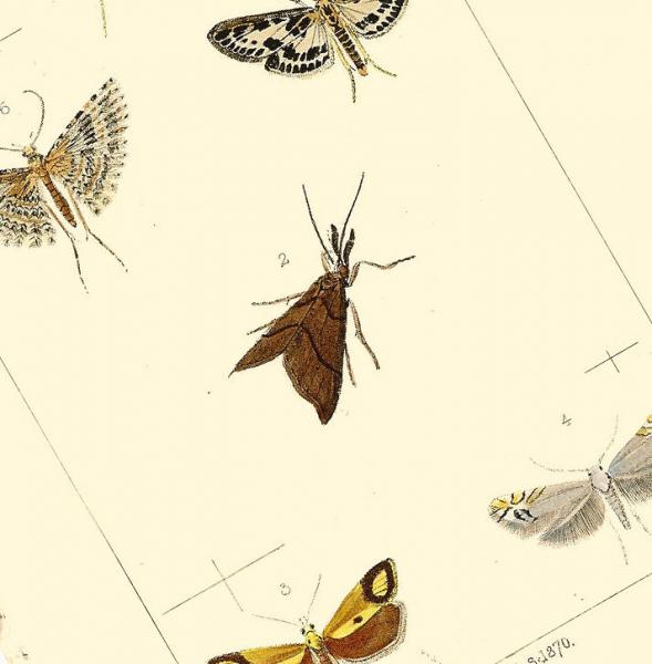 Fritillary Butterflies 1871 Victorian E.W. Robinson Antique Engraved