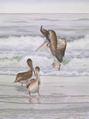 """Pelicans Three"" Giclee Canvas Print by Carol Thompson"
