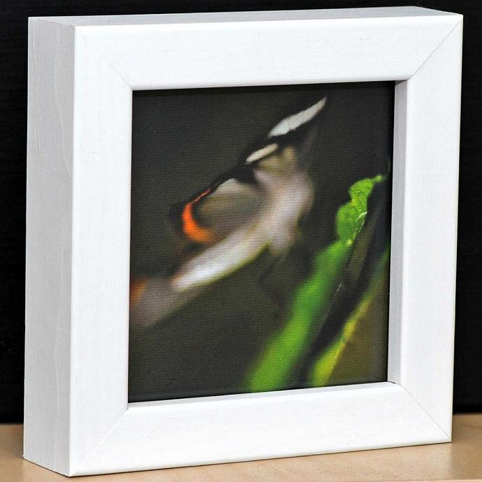 Eco Friendly White Framed Butterfly Print