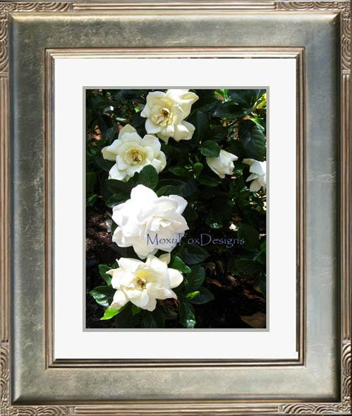 Art --MORNING GARDENIAS  -- Limited Edition --  FREE US SHIPPING
