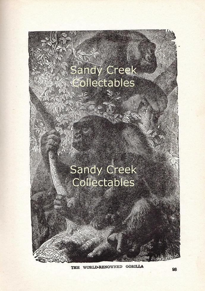 Digital Scan Gorilla Antique Book Page Engraving Printable