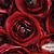 Deep Red 3.5in Ranunculus Silk Flowers