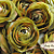 Olive 3.5in Ranunculus Silk Flowers