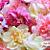 25 Silk Artificial Petite Peony Peonie Flower Lot