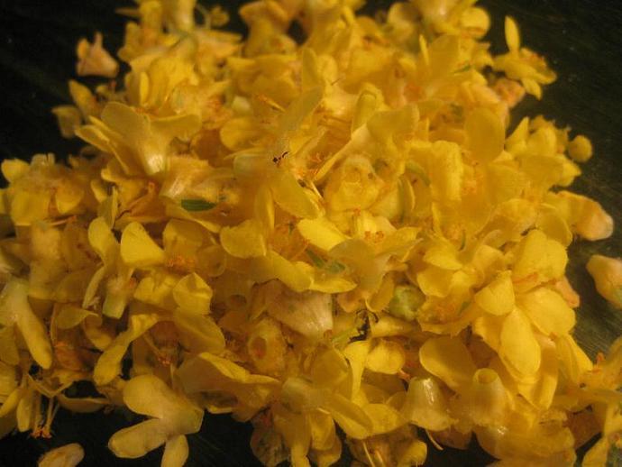 Herbal Garlic Oil for Earache Pain