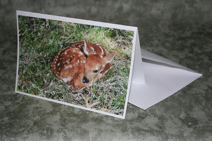 fawn note card