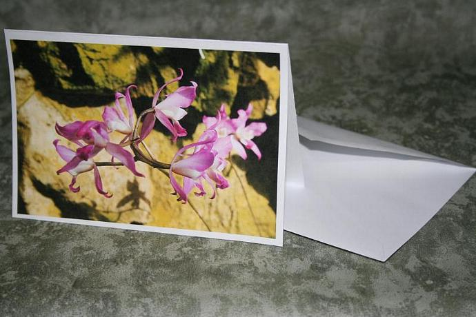 Orchid note card 4