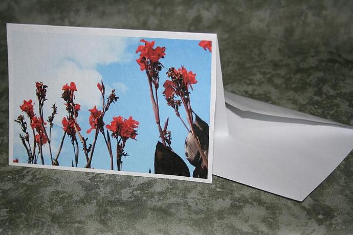 red cannus note card