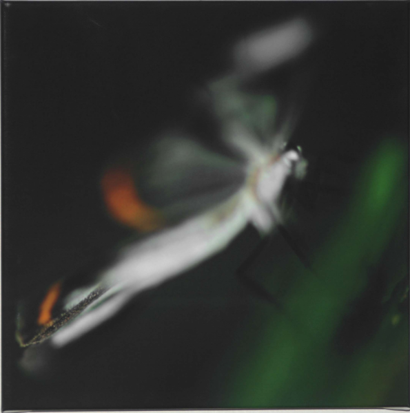 Green Butterfly 30x30cm Canvas Print