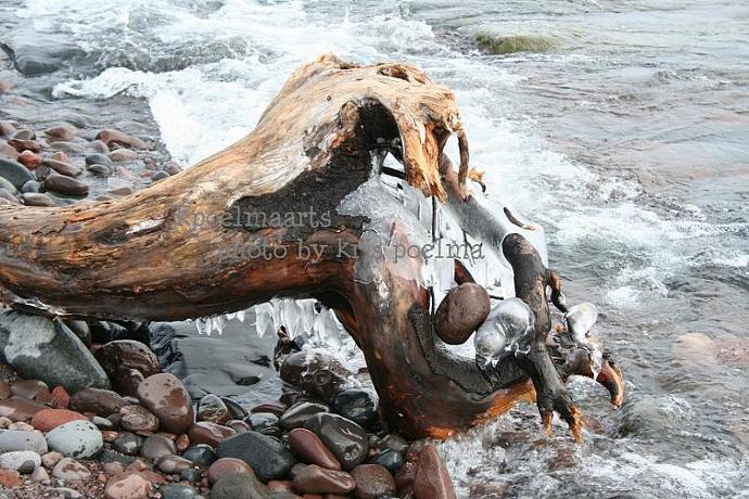 driftwood photo
