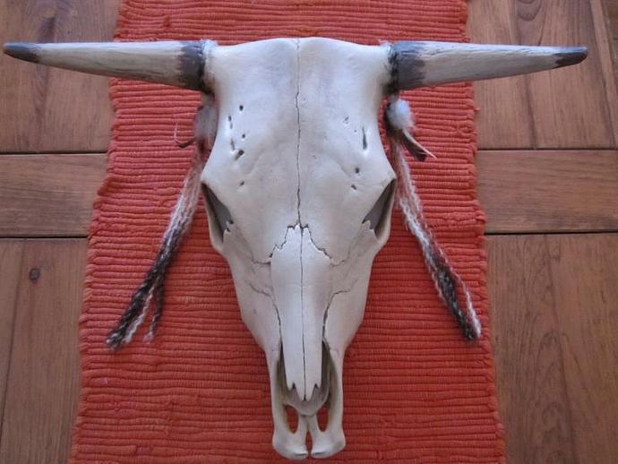 E-M-85 SOUTHWEST COW SKULL