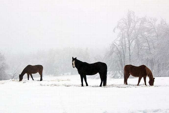 Horses in the Winter Blue Ridge Mountains North Carolina Fine Art Winter Snow
