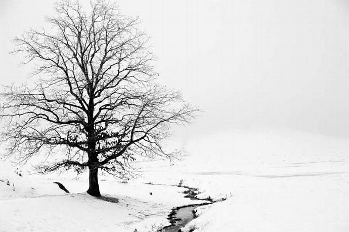 The Blue Ridge Mountains Winter Scene of Lone Tree in Snow and Fog