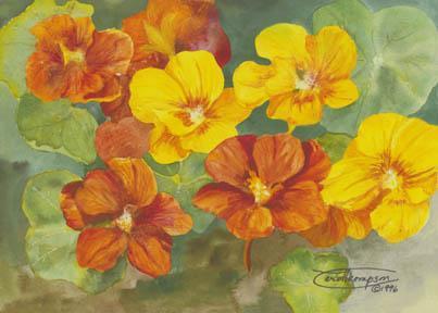 """Nasturtiums"" Giclee Paper Print Flower by Carol Thompson"