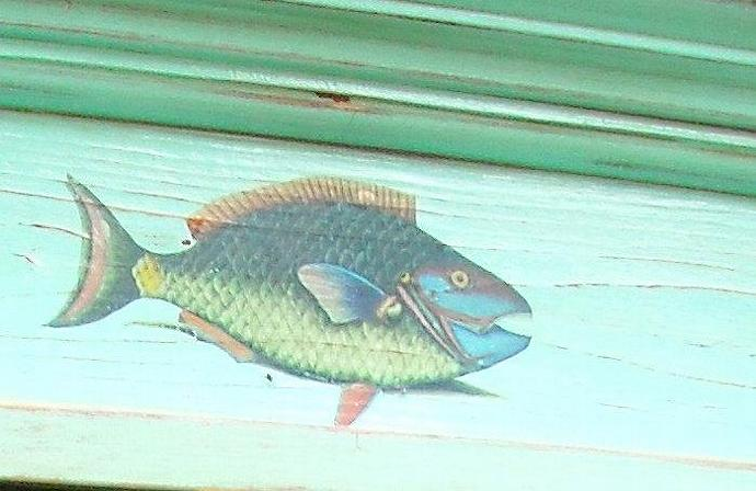Parrot fish on an Antiqued Acqua Farmhouse bulletin board
