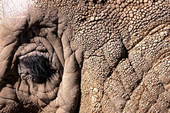 An Elephants Eye in Great Detail Fine Art Photo