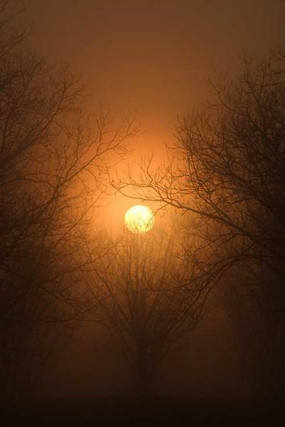 Sun Rising Through Fog Silhouetting Trees Fine Art Photo