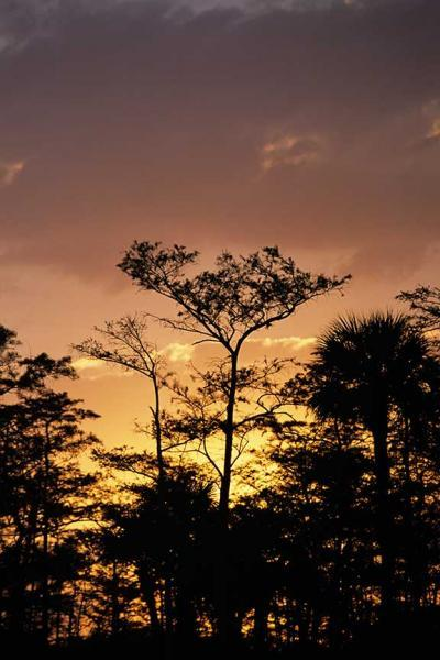 Sunset in the Everglades Silhouetting the Forest Fine Art Photo