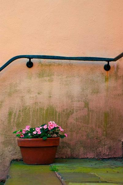 Flower Pot on a Stairway Fine Art Photo Still Life