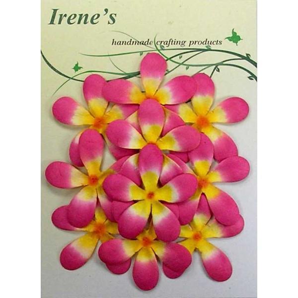 Frangipani Flower Pack
