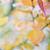 Golden Leaves 50x50cm Canvas Print