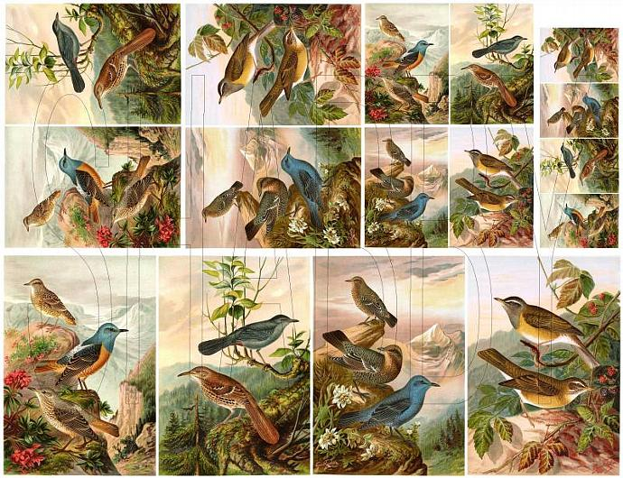 Shabby Chic Birds Digital collage sheet for scrapbook and cards  DC640