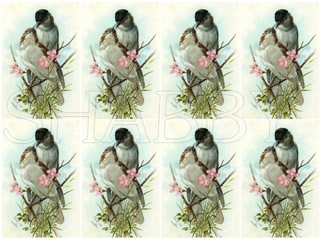 Shabby Chic sheet for scrapbook and cards  DC709 Birds