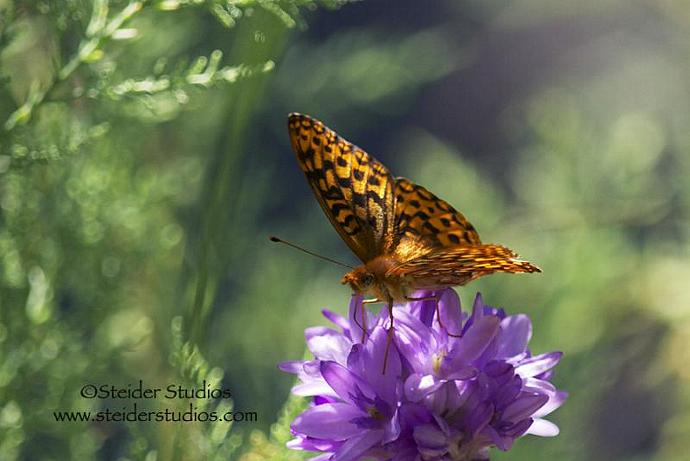 Macro Art Photograph of a Fritillary Butterfly, All Occasion Greeting Card