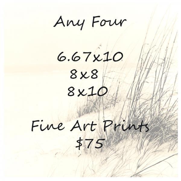 Any Four 8x8 - 8x10 or 6.67x10 Fine Art Prints $75