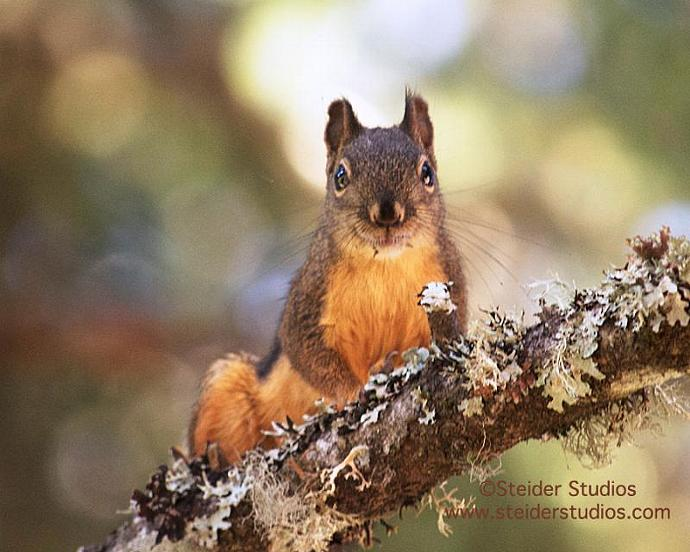 Fine Art Photography Squirrel on Tree Branch Nature Blank Note Card