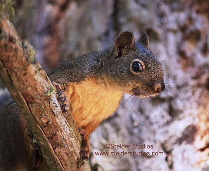 Fine Art Photograph Squirrel Profile Portrait in Nature Blank Note Card