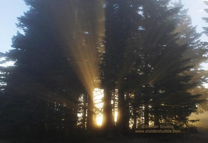 Landscape Photography Inspirational Sun Rays Through Trees All Occasion