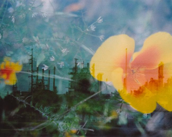 industrial organic.  8 x 10.  multiple exposure photograph.