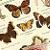 Butterflies 1935 Antique Carl Gronemann Natural History Lithograph