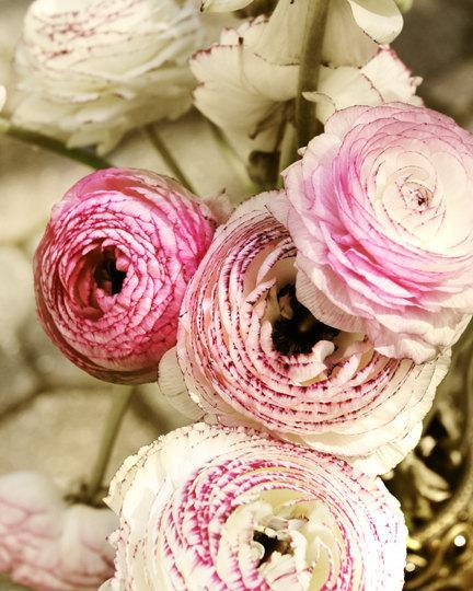 Pretty Floral Still Life photography, ranunculus photo, magenta wall decor, pink