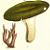 Brittlegill Mushrooms 1884 Victorian M. C. Cooke Antique Botanical Engraved