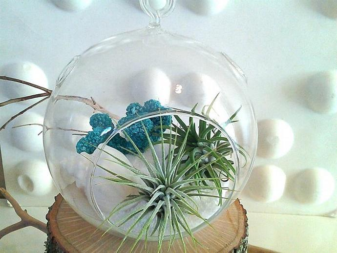 OCEAN - A beautiful globe terrarium with 2 large air plants, turquoise coral, a