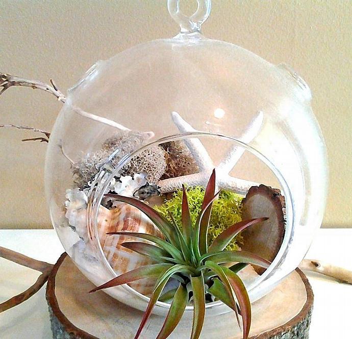 Starfish Large Round Glass Globe Terrarium By Jtlcreations On Zibbet
