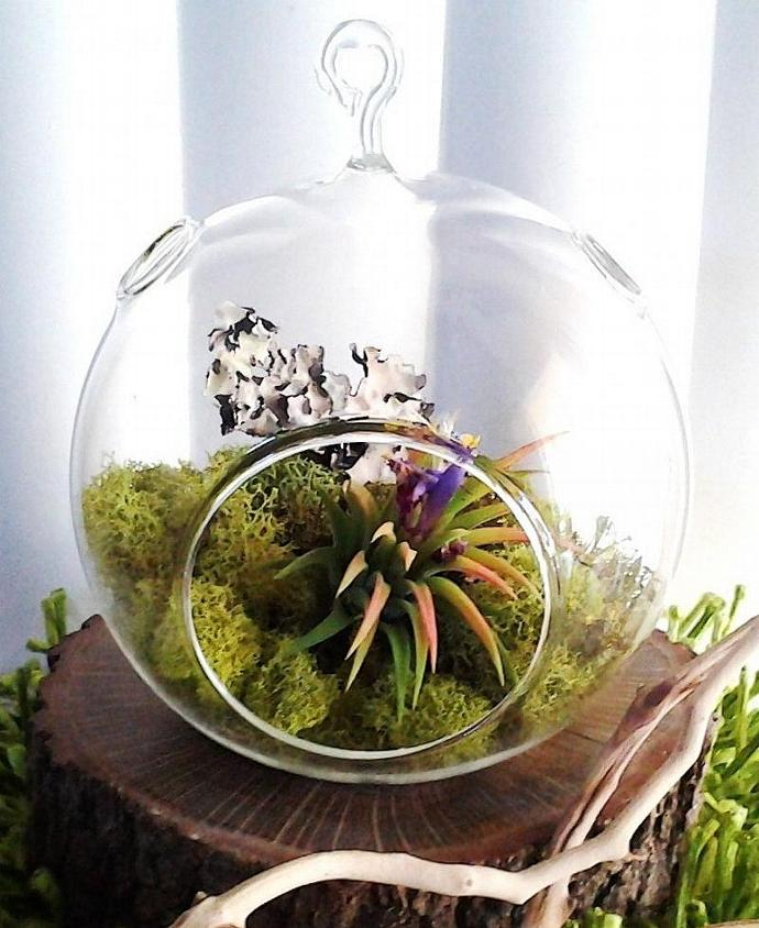 Forest Round Glass Globe Terrarium With By Jtlcreations On Zibbet